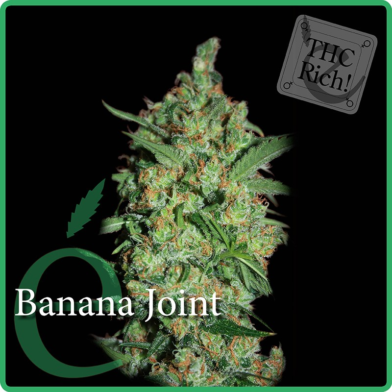 Banana Joint – Elite Seeds