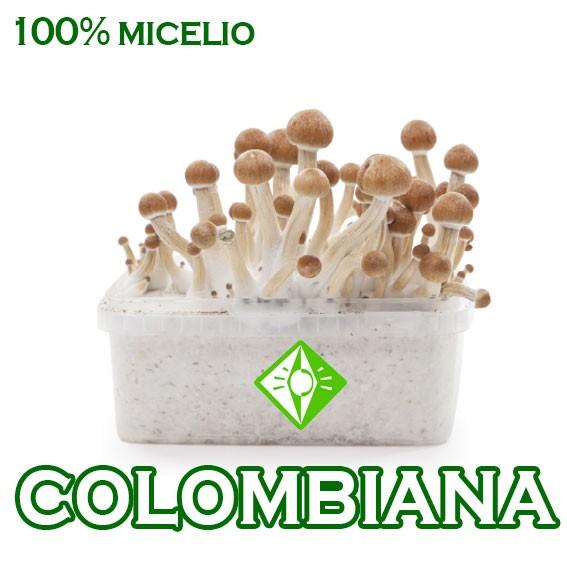 Setas online cool redondo de ternera con setas carnicera for Www houseplant net