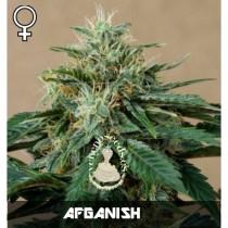 comprar semillas feminizadas afganish de veneno seeds