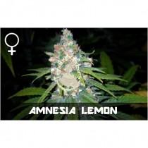 comprar semillas feminizadas amnesia lemon de veneno seeds