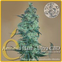 Amnesia Haze - Ultra CBD - Elite Seeds