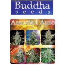 Assorted Mix Auto - Buddha Seeds