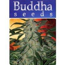 Deimos - Buddha Seeds