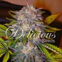 La Musa Auto – Delicious Seeds