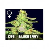 comprar semillas feminizads cinderella99 x blueberry de veneno seeds