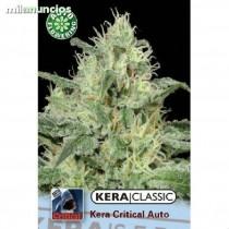 Critical Auto – Kera Seeds