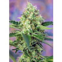 Crystal Candy Sweet Seeds