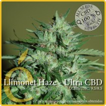 Llimonet  Haze Ultra CBD - Elite Seeds