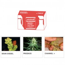 Coleccion 1 Medical Seeds