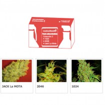 Coleccion 2 Medical Seeds