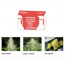 Coleccion 4 Medical Seeds