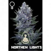 comprar semillas feminzdas notherm lights de veneno seeds