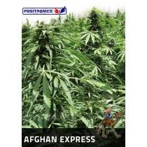 Afgan Express Autofloración - Positronics