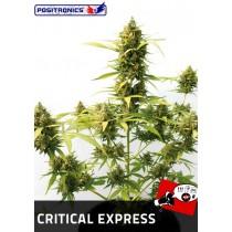 Semillas Critical Express Autofloración  Positronics