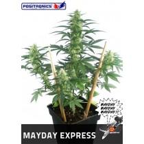 May Day Express Autofloración - Positronics