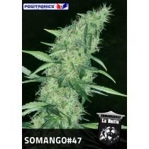 Somango #47 Femenina - Positronics