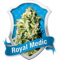 Royal Medic – Royal Queen