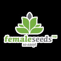 X-Line Auto Haze – Female Seeds