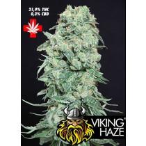 Viking Haze – Pure Seeds