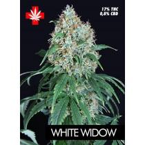 White Widow – Pure Seeds