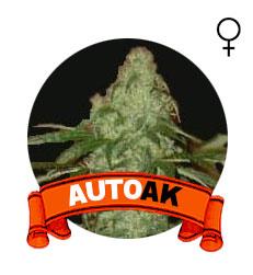 comprar-auto-ak-marihuana