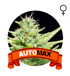 auto-skunk-marihuana