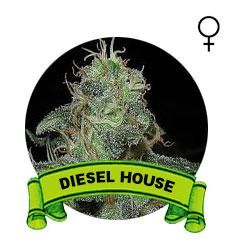 comprar-semillas-marijuana-diesel