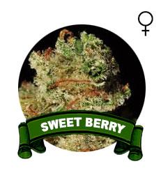 comprar-sweet-seeds