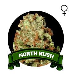 comprar-semillas-marihuana-north-kush