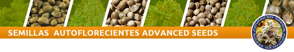 Advanced Seeds Auto