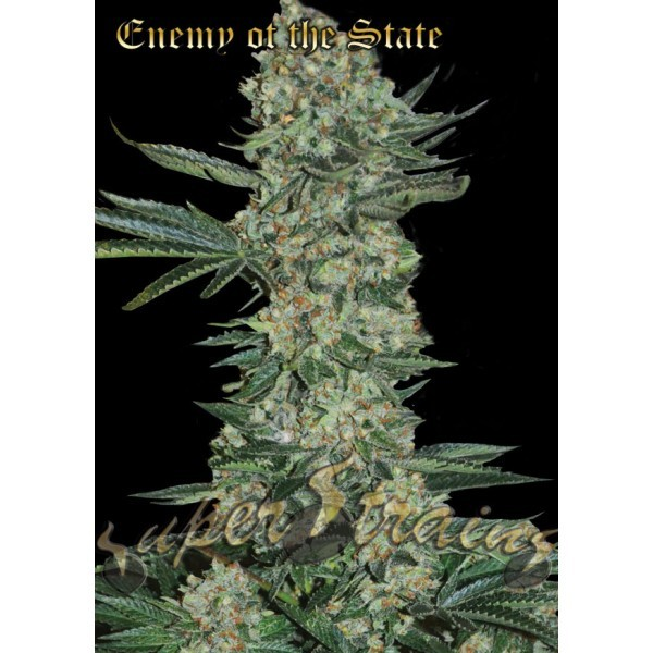 Enemy of the State – Super Strains