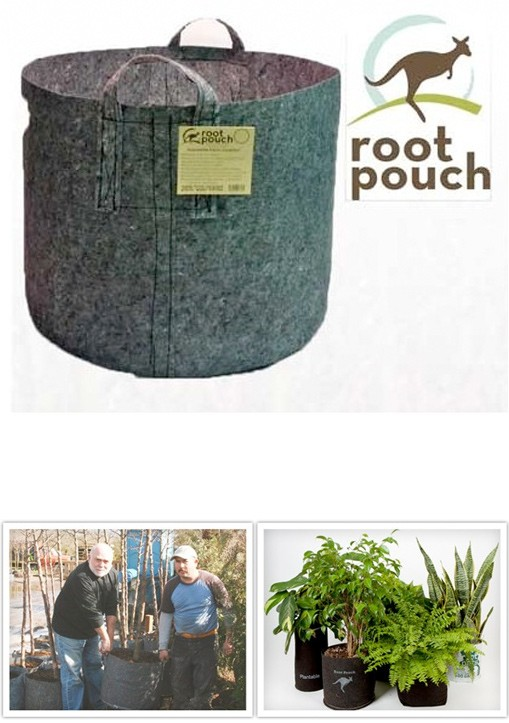 Root Pouch Asas