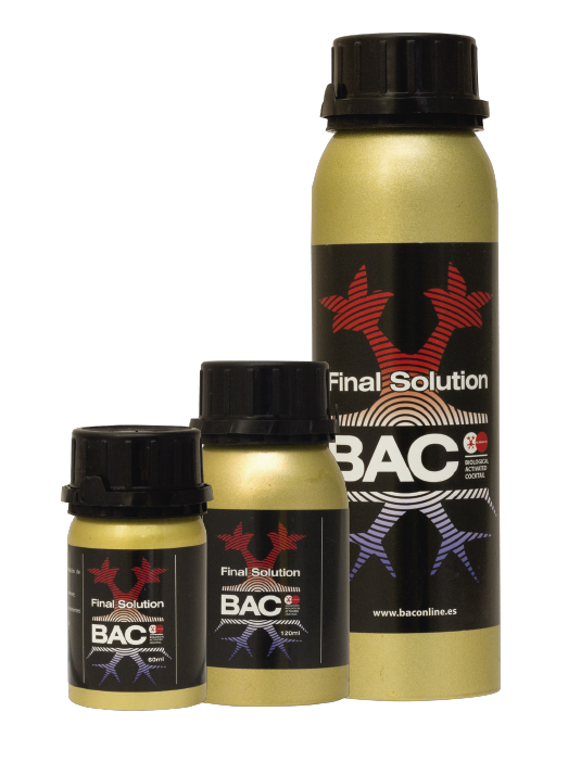 Final Solution - BAC