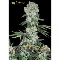 7th Wave – Super Strains