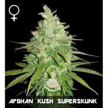 comprar semillas feminizadas afghan kush x superskunk de veneno seeds