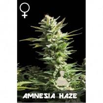 comprar semillas feminizadas amnesia haze de veneno seeds