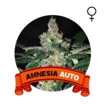 Auto Amnesia Houseplant Seeds