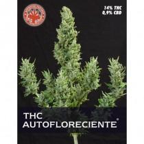 comprar semillas thc autoflorecientes de pure seeds