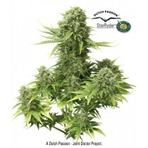 Star Ryder Auto – Dutch Passion