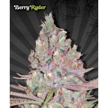 Berry Ryder – Auto Seeds
