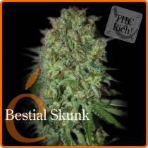 Bestial Skunk – Elite Seeds