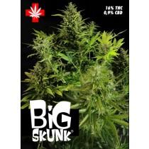 Big Skunk – Pure Seeds