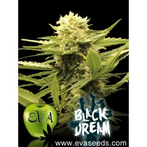 Black Dream - Eva Seeds