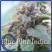 Blue Elite Indica – Elite Seeds