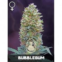 comprar semillas feminizadas bubblegum de veneno seeds