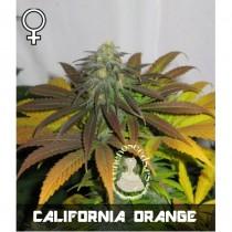 comprar semillas feminizadas california orange x skunk de veneno seeds