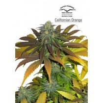 California Orange – Dutch Passion