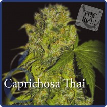 Caprichosa Thai – Elite Seeds