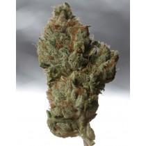 Cold Creek Kush Regular – T.H. Seeds