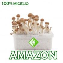 venta online pan setas amazonia